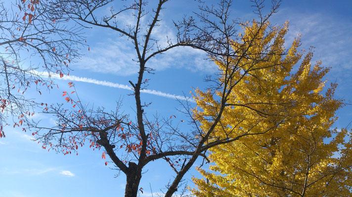 ~  ひこうき雲  ~  秋から 冬へと  かけぬけるっ♪  (2015.11.26) (c) Yukie Arai