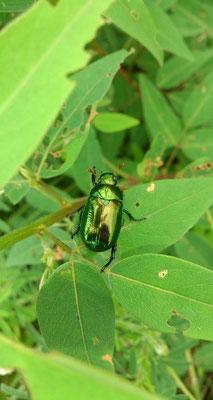 ~ green☆ green☆ ~ 「 Hello~ 」  「 Hello~ 」と、私も手をふった♪ (2014.7.17) (c) Yukie Arai