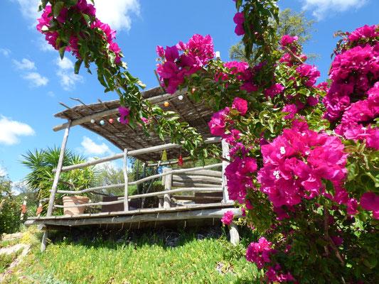 Terrasse mit Bougainvellia und Blumen