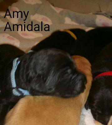 Amy bzw Amidala