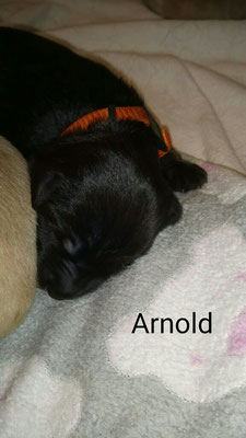 "Arnold ""Arny"" vom Bernauer Bären 🐻"
