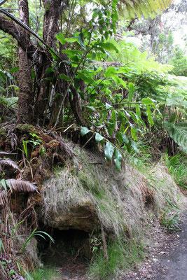 Kilauea Volcano National State Park