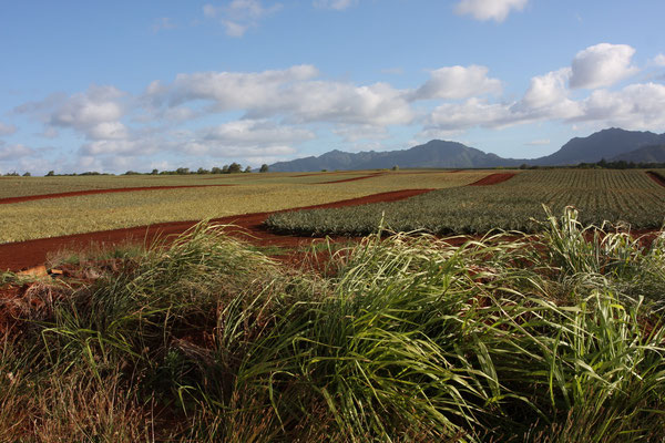 Dole Pineapple Plantage