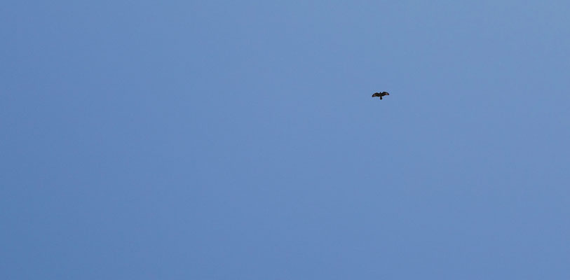 fin d'après-midi sous le vol d'un aigle...