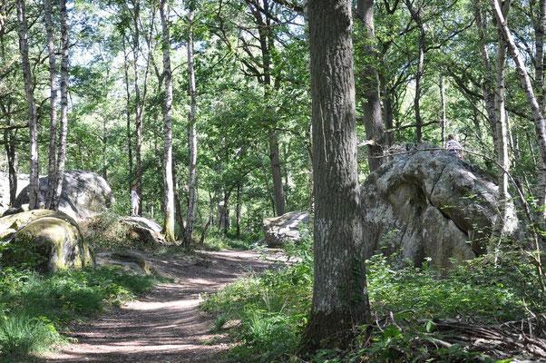 Coincy : Sentier de randonnée dans les bois