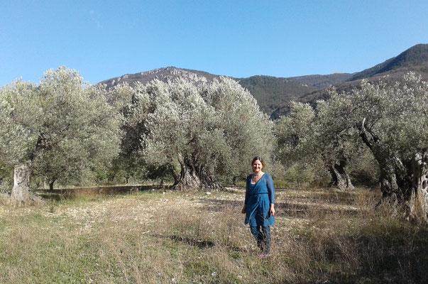 Au coeur du plateau des oliviers Estoublon Alpes de Hte Provence