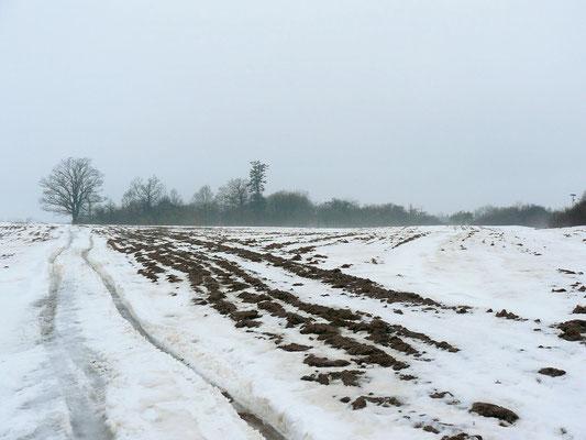 Feuchte, schwere Luft durch Tauwetter erschwert das Laufen durch den schwernassen Schnee... Wehe dem, der es wagt, über den Acker zu laufen...