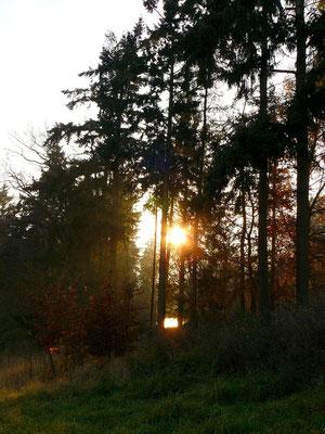 Die Sonne und der See blinzeln durch die hohen Fichten