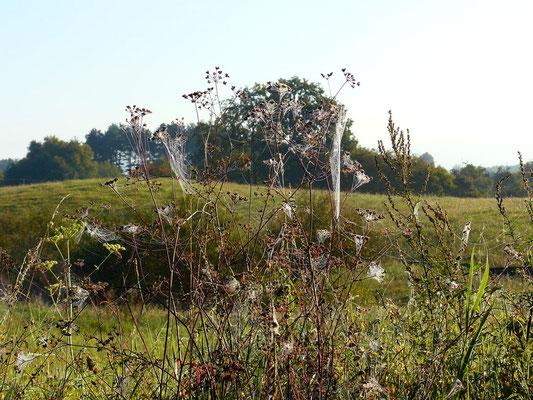 Gespinst-Gebilde – mit der Landschaftsform im Einklang