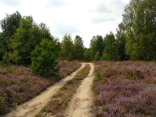 Verträumte Heidelandschaft – man kann die Ruhe spüren...