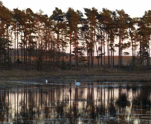 Ein weiterer Schwanensee von der Abendsonne beleuchtet