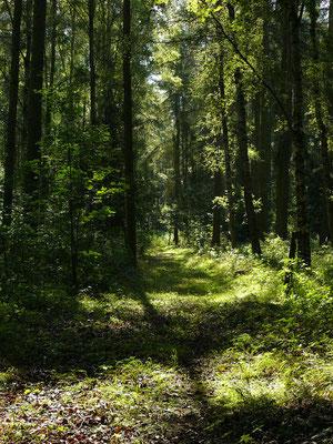 Morgenpirsch im Wald – dann ist der Tag gewonnen!