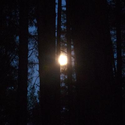De Wald-Latücht!