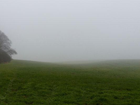 geheimnisvolle Wiese in Nebel getaucht