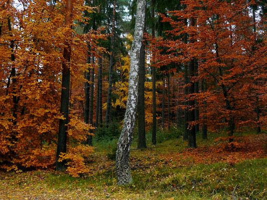 Wer hat das schönste Herbstkleid an?