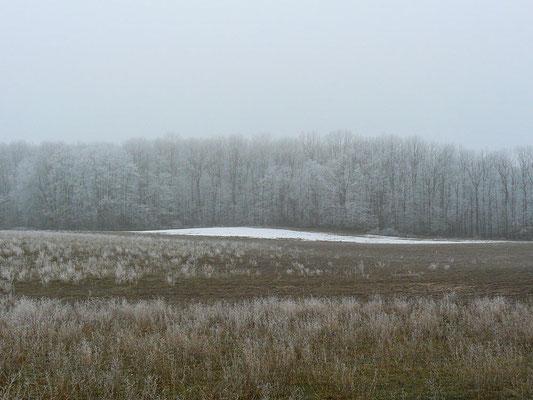 Raureif-Landschaft