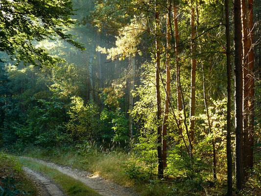 Liebliche Morgenstimmung im Wald