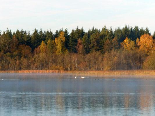 Die Schwäne machen dem Kölpinsee namentlich alle Ehre (=slawisch: Schwanensee)