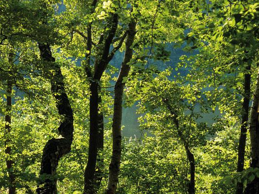 Blick zum Waldsee