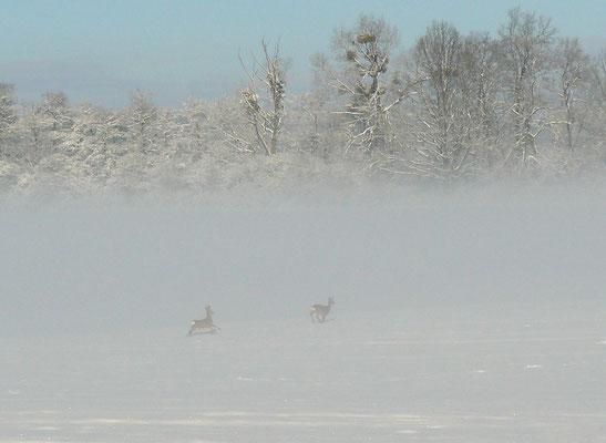 Rehpaar im Nebel