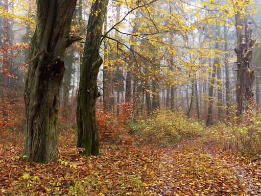 Wanderweg am Rande des Parks zu Boitzenburg