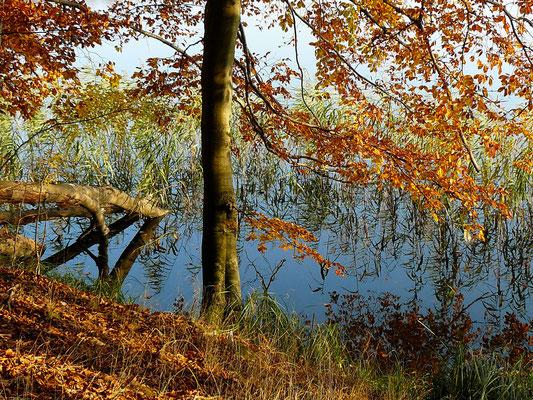 Herbstliche Farbkontraste am See