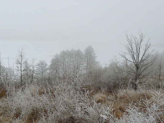 Raureif-Landschaft (im Hintergrund der Sabinensee)