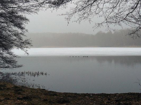 """Winter""""gemälde"""" mit Enten auf dem See"""