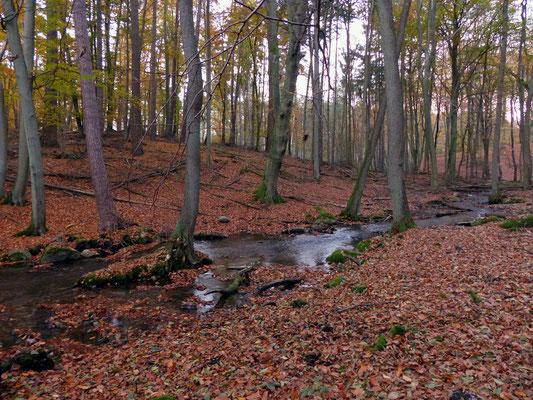 Urige Landschaft mit Fließ (Grenzfließ zwischen Brandenburg und Mecklenburg)