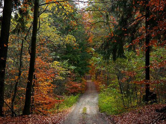 Bunt geschmückter Weg nach Arnimswalde