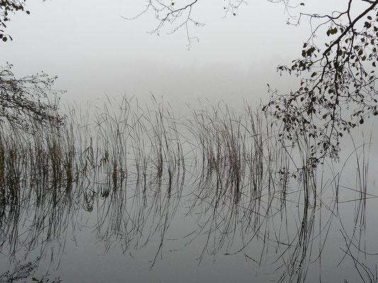 Sich spiegelnde Gräser, horziontlose Landschaft?