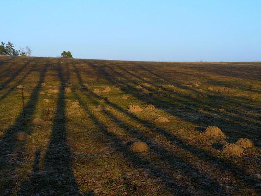 Die langen Schatten der kalten Jahreszeit über Maulwurfshügeln