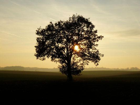 Ein zeitloses, stilles Bild voller Frieden...