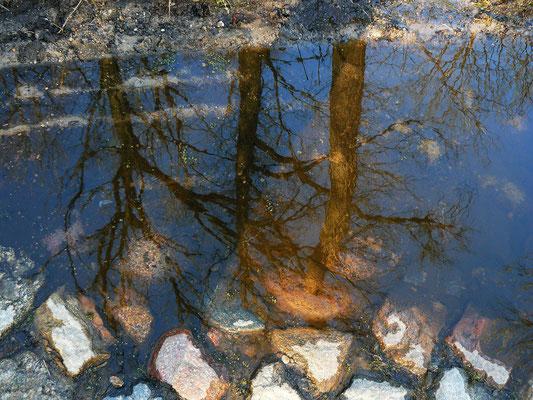 Die Spiegelung dreier Eichen auf dem überschwommenen uralten Kopfsteinpflaster-Landweg