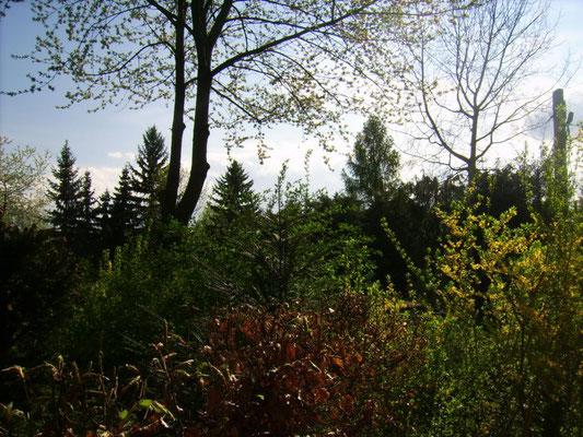 Blick von der Terrasse hinaus in den Wald