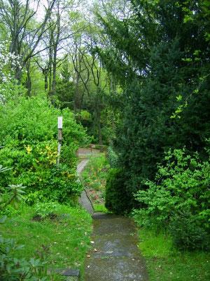 Hauptweg - vom Gartenhaus 'runter zum Eingang