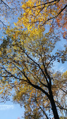 Herbst im Waldgarten