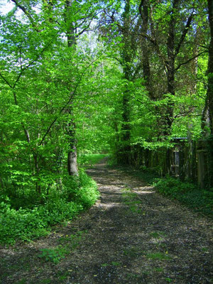Waldweg außerhalb des Gartens