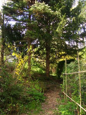 """""""Waldweg"""", rechts die Stütze für die Himbeeren"""
