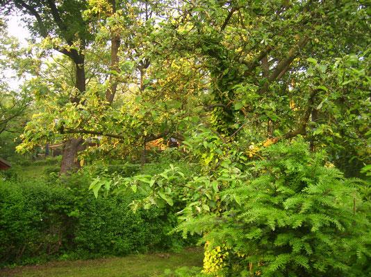 """Blick über den Garten zu den Nachbarn - man hockt sich nicht """"auf der Pelle"""" und sieht das Nachbargrundstück kaum."""