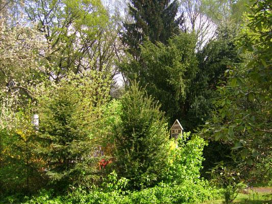 Insektenhotel umgeben von Eiben und Tannen