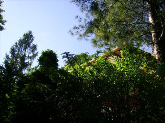 Blick zur Terrasse von der unteren Gartenetage aus - nur die oberen Enden der Pergola sind zu sehen