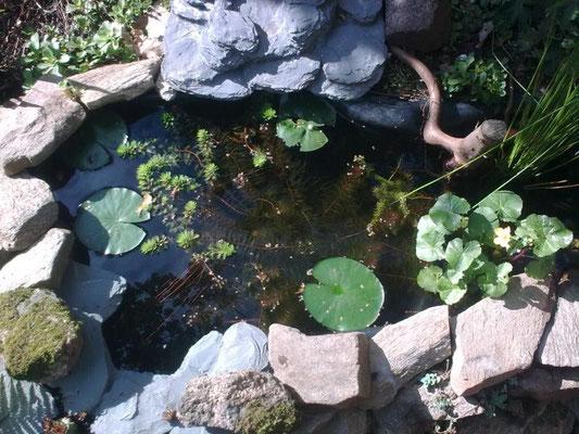 September '12: Die Wasserpflanzen sind bereits gut eingewachsen
