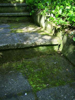 Moosbewachsene Treppe auf dem Hauptweg