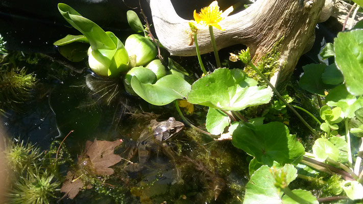 Der Teich im April