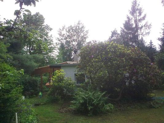 Gartenhaus mit Terrasse/Pergola hinter uraltem Rhododendron