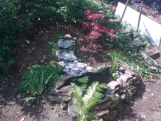 August '12: Immer mehr Pflanzen ziehen vom alten Garten um - an und im Teich