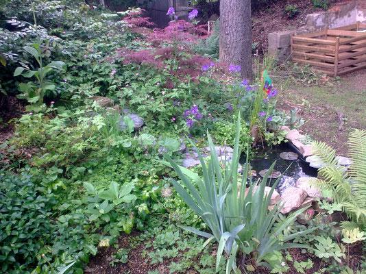 Teichanlage mit Kompostecke im Hintergrund