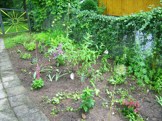 Juni '13: Das letze Stück der Blumenrabatte gerade frisch angelegt
