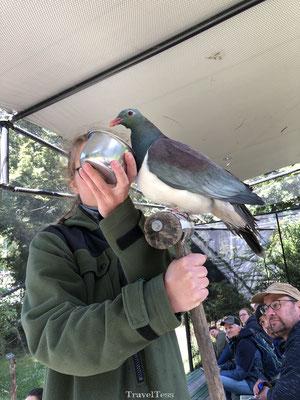 Kiwi Birdlife Park grote duif